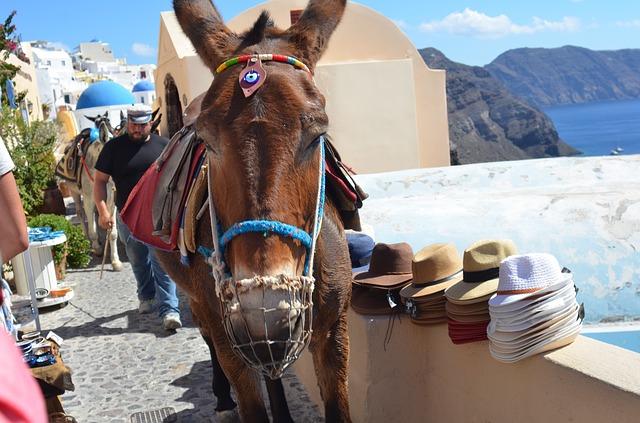 donkey-3678060_640